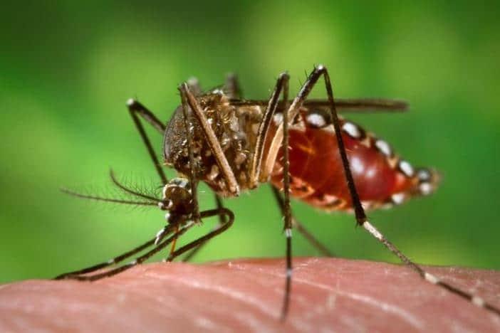 Le virus Zika pourrait egalement menacer le cerveau des adultes